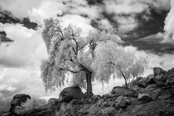 Wall Art - Photograph - California Pepper Tree by G Wigler