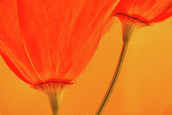 California Poppy Photograph - California Poppies Painterly Effect by Carol Leigh