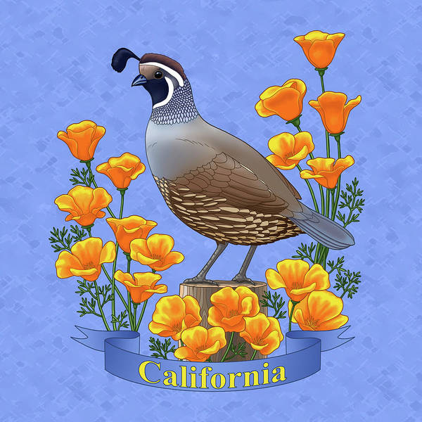 Quail Wall Art - Painting - California Quail And Golden Poppies by Crista Forest