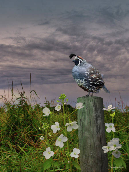 Wall Art - Digital Art - California Quail And Milkmaids by M Spadecaller