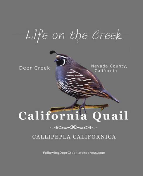 Digital Art - California Quail - Color Bird - White Text by Lisa Redfern