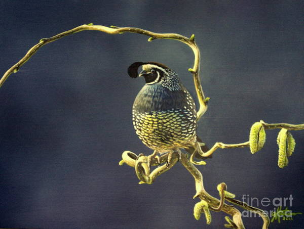 Painting - California Quail by Greg and Linda Halom