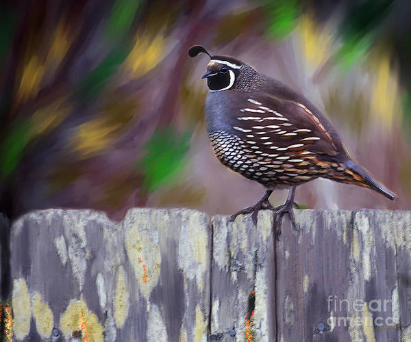 Digital Art - California Quail by Lisa Redfern