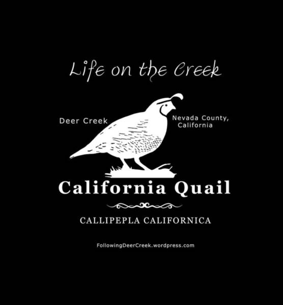 Digital Art - California Quail - White Graphics by Lisa Redfern
