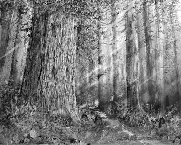 Wall Art - Drawing - California Redwood Enchanced by Jim Hubbard