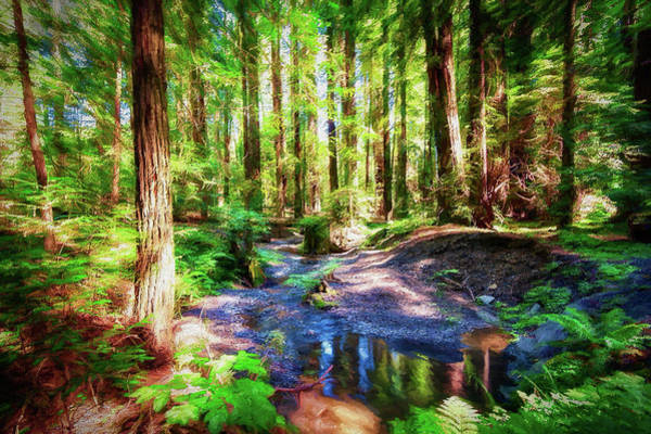 California Redwood Forest Wetlands Ap Art Print by Dan Carmichael
