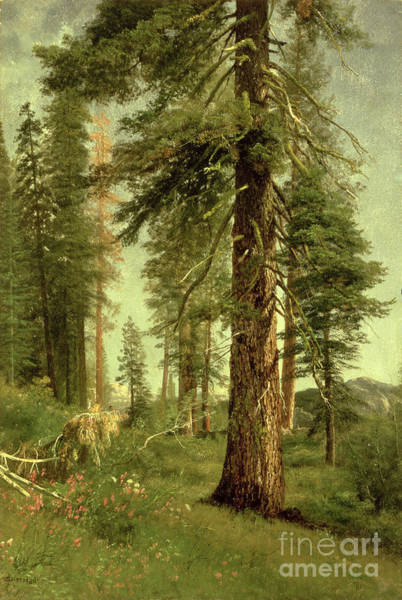 California Landscape Painting - California Redwoods by Albert Bierstadt