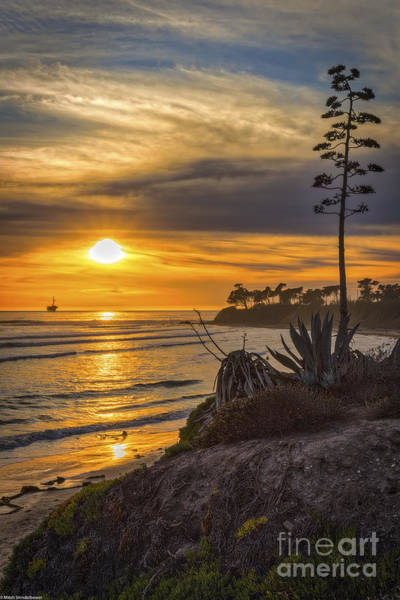 Isla Wall Art - Photograph - California Sun by Mitch Shindelbower