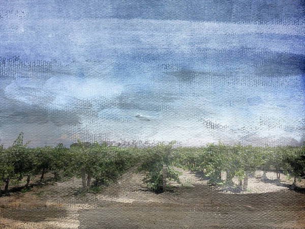 Vines Wall Art - Mixed Media - California Vineyard- Art By Linda Woods by Linda Woods