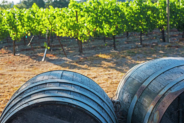 Photograph - California Wine Country Wine Barrels Sonoma Valley by Toby McGuire