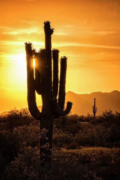 Silhoutte Photograph - Call It Desert Gold  by Saija Lehtonen