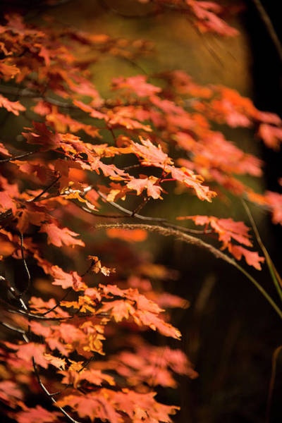 Wall Art - Photograph - Call Of Autumn by Aaron Bedell