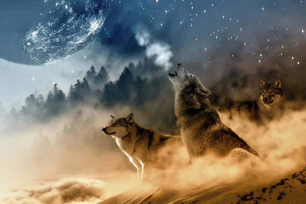 Alpha Wolf Wall Art - Photograph - Call Of Nature by Pixabay