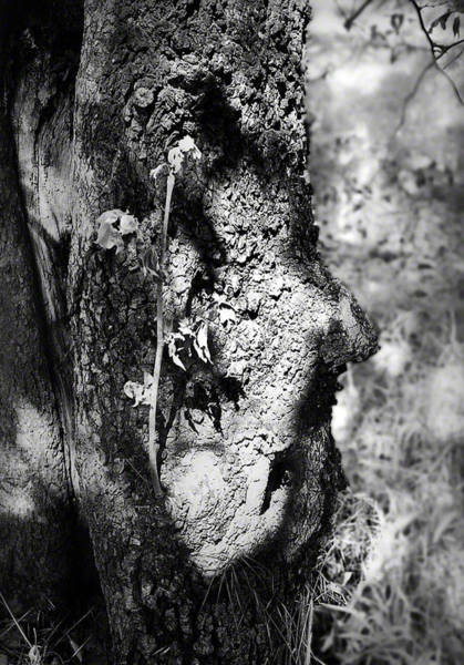 Photograph - Call Of The Elder by Maria Reverberi