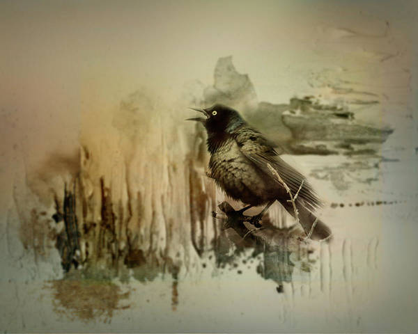 Wall Art - Photograph - Call Of The Grackle by Susan Capuano