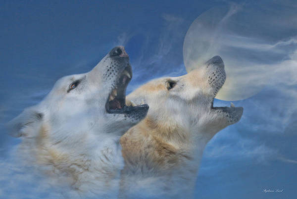 Howling Photograph - Call Of The Wild by Stephanie Laird