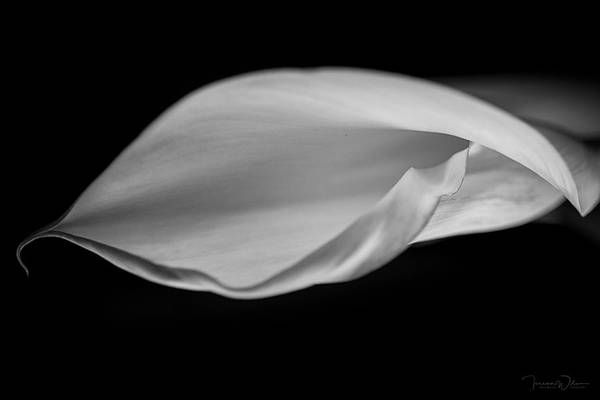 Photograph - Calla Curl In Black And White by Teresa Wilson