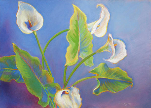 Drawing - Calla Lilies by Linda Ruiz-Lozito