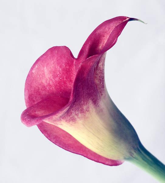 Neiman Photograph - Calla Lily 1 by Bob Neiman