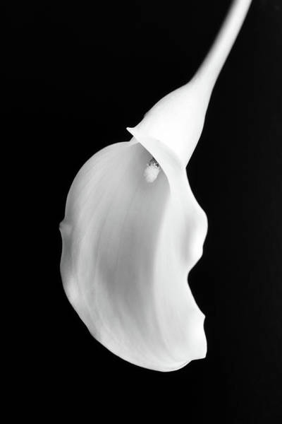 Photograph - Calla Lily by Kristen Wilkinson
