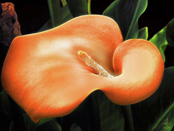 Digital Art - Calla Lily by Pennie McCracken