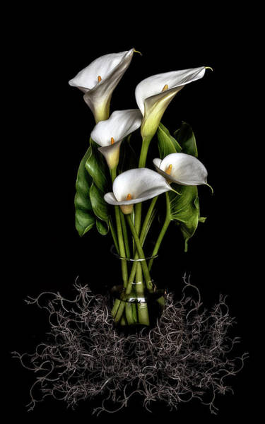 Photograph - Calla Lily Still Life by Wes and Dotty Weber