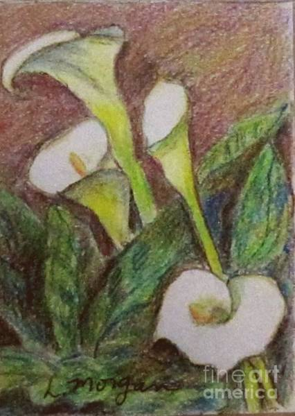 Drawing - Calla Quartet by Laurie Morgan