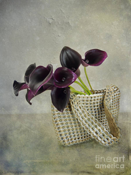 Photograph - Calla's Bag by Hans Janssen