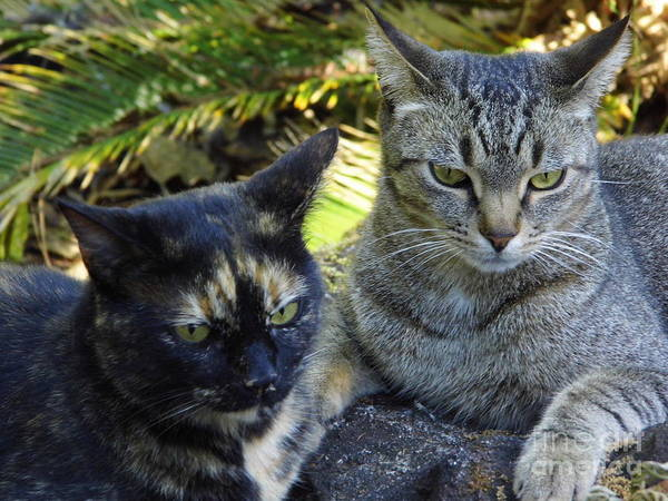 Photograph - Callie And Stripe by D Hackett