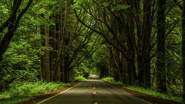 Photograph - California's Avenue Of The Giants by TL Mair