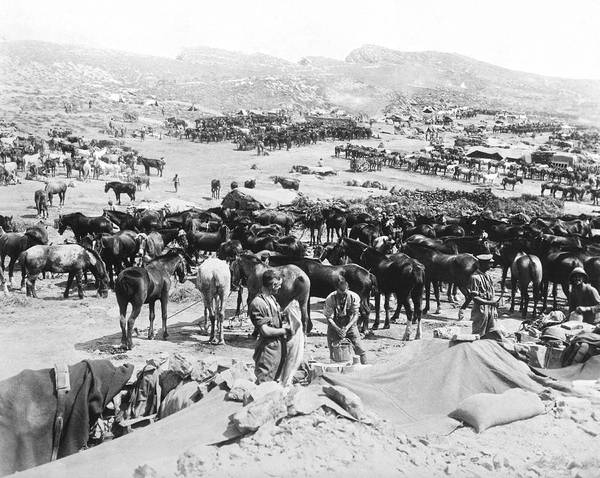 Horseman Photograph - Calvary Camp In Dardanelles by Underwood Archives