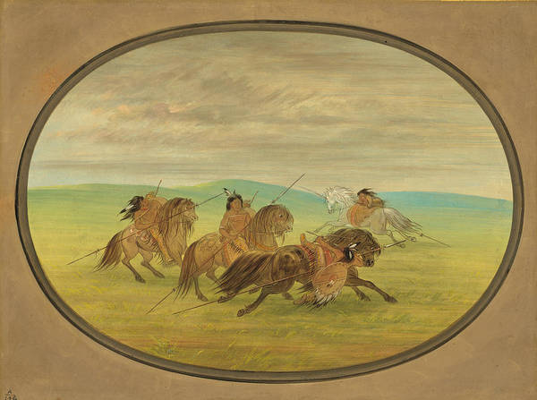 Horsemanship Painting - Camanchee Horsemanship by George Catlin