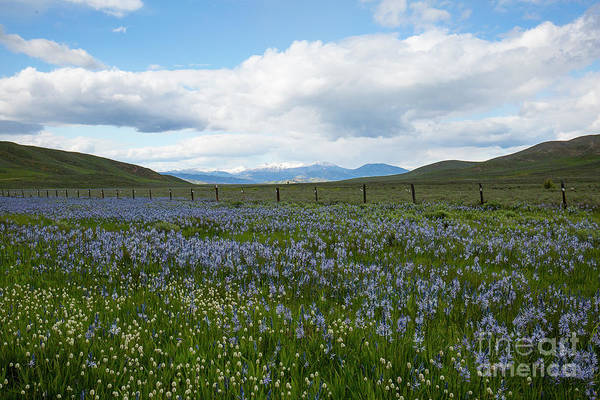 Wall Art - Photograph - Camas And The Soldier Mountains by Idaho Scenic Images Linda Lantzy