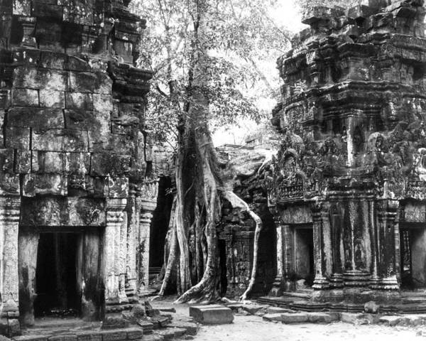Photograph - Cambodia: Ta Prohm by Granger