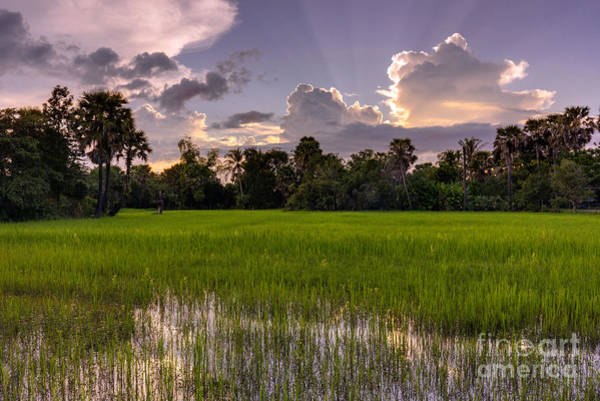 Cambodia Photograph - Cambodian Rice Fields Dramatic Cloudscape by Mike Reid