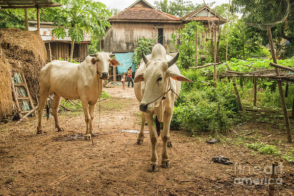 Photograph - Cambodian Village by Werner Padarin