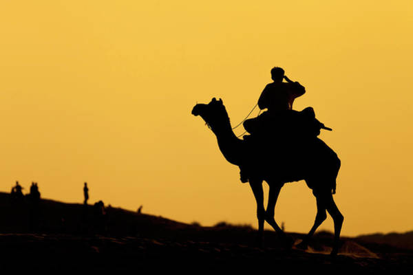 Photograph - Camel At Jaisalmer, India by Mahesh Balasubramanian
