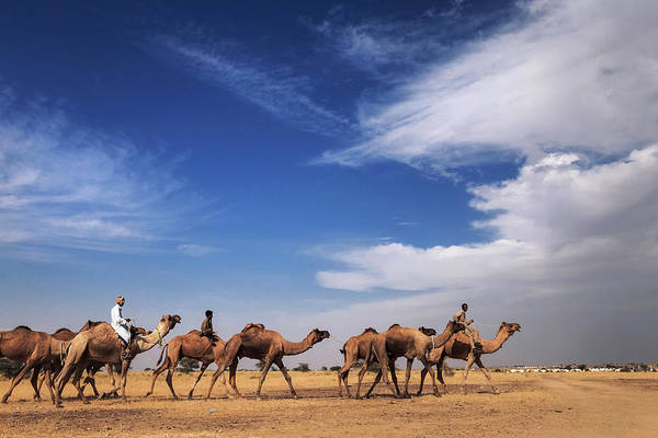 Photograph - Camel Raiders, Jaisalmer, India by Mahesh Balasubramanian