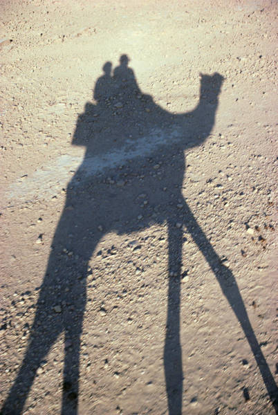 Gloria Photograph - Camel Shadow by Gloria & Richard Maschmeyer - Printscapes