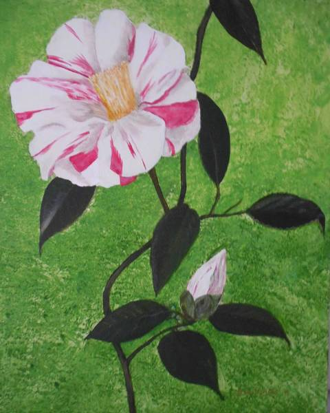 Don Williams Painting - Camelia In Full Bloom by Don Williams