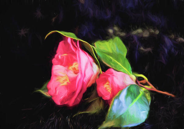 Photograph - Camellia On Black by Kay Brewer