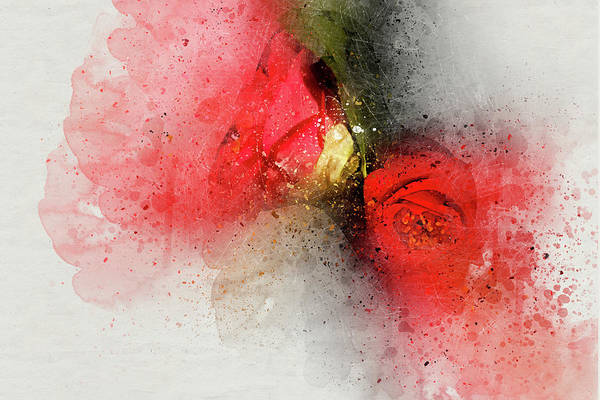 Photograph - Camellia Burst by Kay Brewer