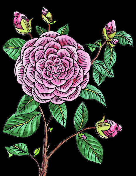 Line Drawing Painting - Camellia Flower Watercolour  by Irina Sztukowski