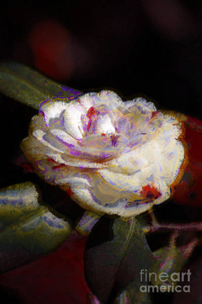 Photograph - Camellia1 by Donna Bentley