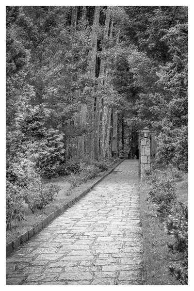 Photograph - Caminho-mosteiro Das Monjas Beneditinas-campos Do Jordao-sp by Carlos Mac
