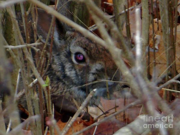 Photograph - Camo Bunny by Rockin Docks Deluxephotos