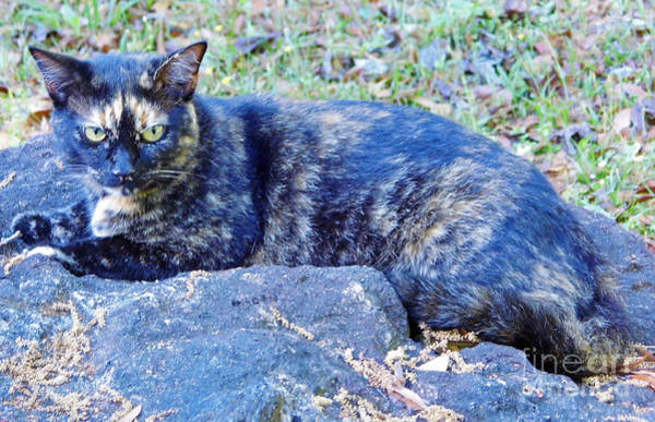 Photograph - Camouflaged Cat by D Hackett