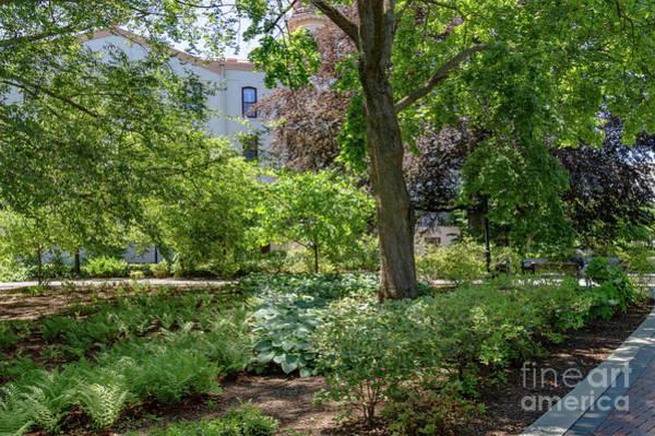 Photograph - Campus Garden by William Norton