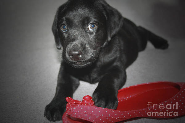 Photograph - Can I Have It  by Cathy Beharriell