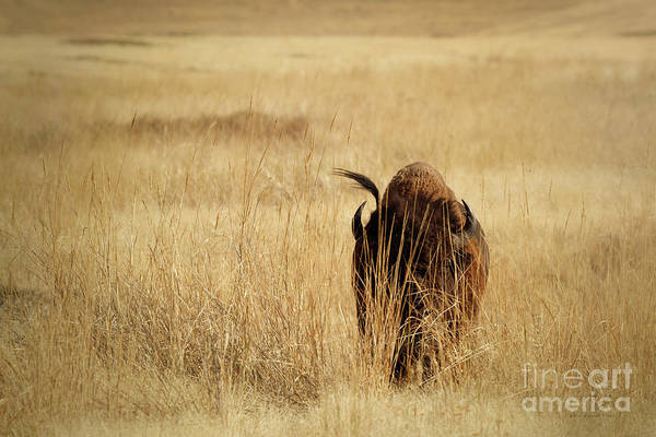 Photograph - Can They See Me Now by Beve Brown-Clark Photography